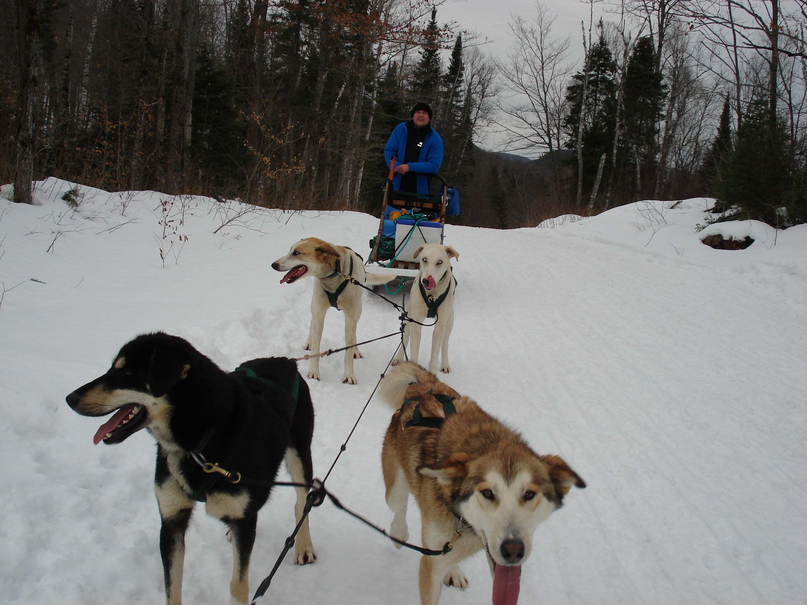 Dog Sleds For Sale Ontario