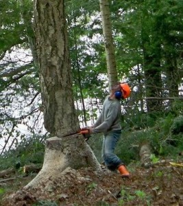 Ololo_Bill-Pocock_felling-tree